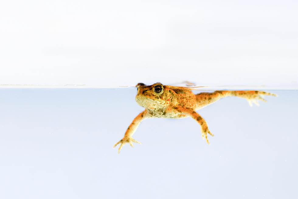 Erdkröte  - Mädchen aufm Dach | Fenja Hardel