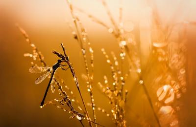 Lichter im Moor.